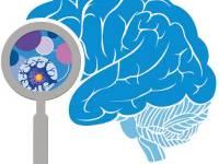 Neurociencia y Mantenimiento Minero